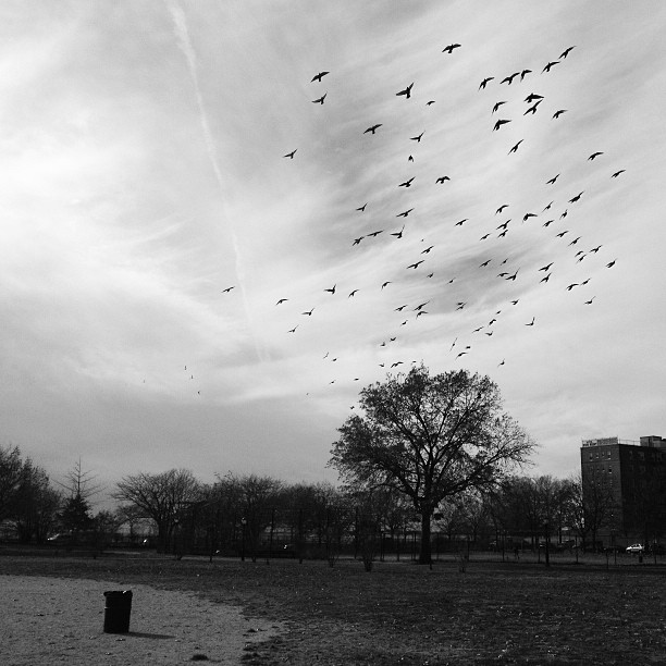 Photo of Birds in Park